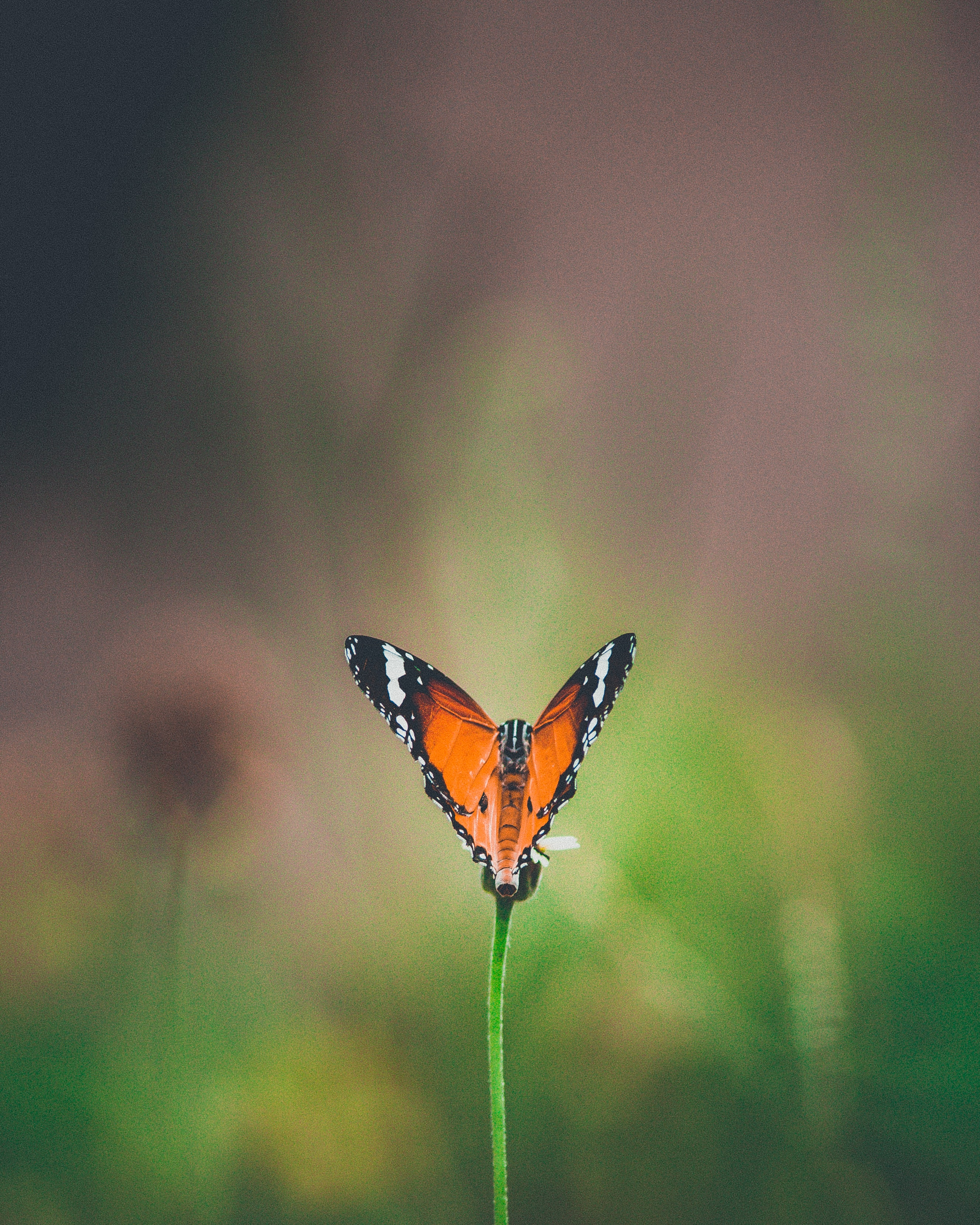 selective focus photography of brown and black butterfly