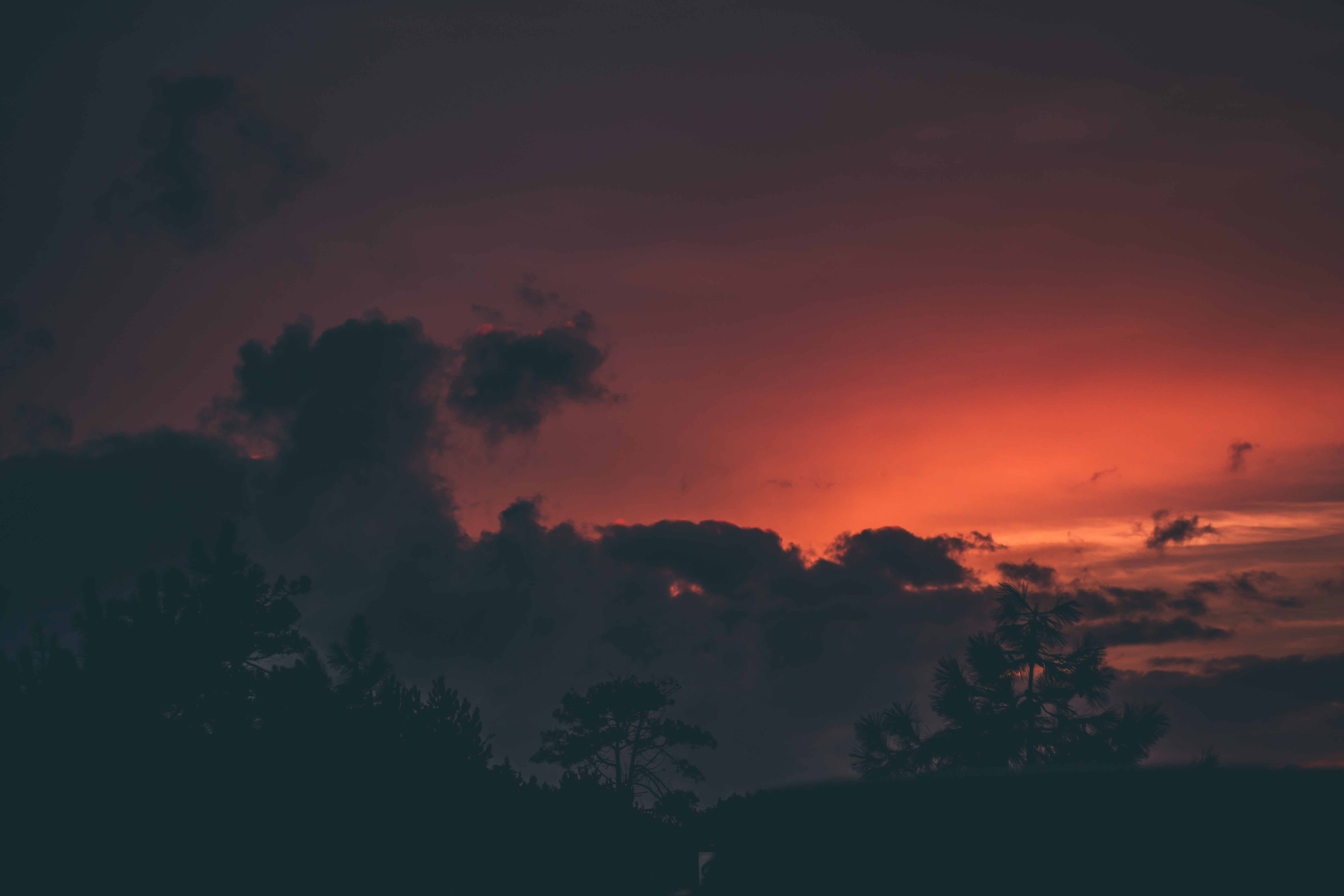 silhouette photo of tree under red sky