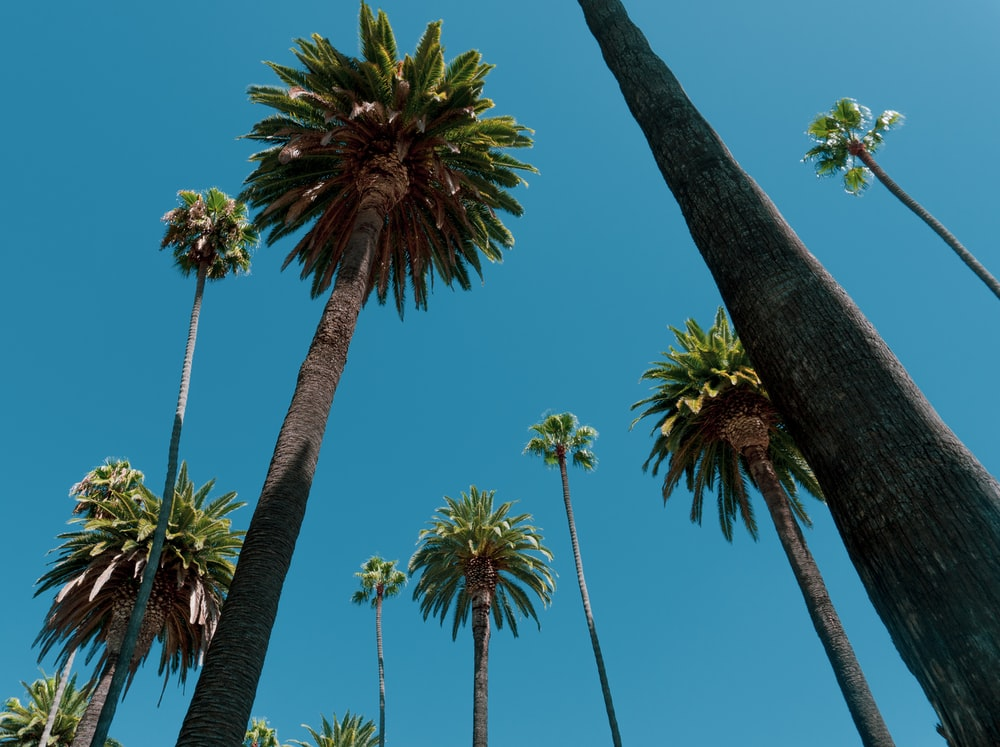 low-angle photo of trees