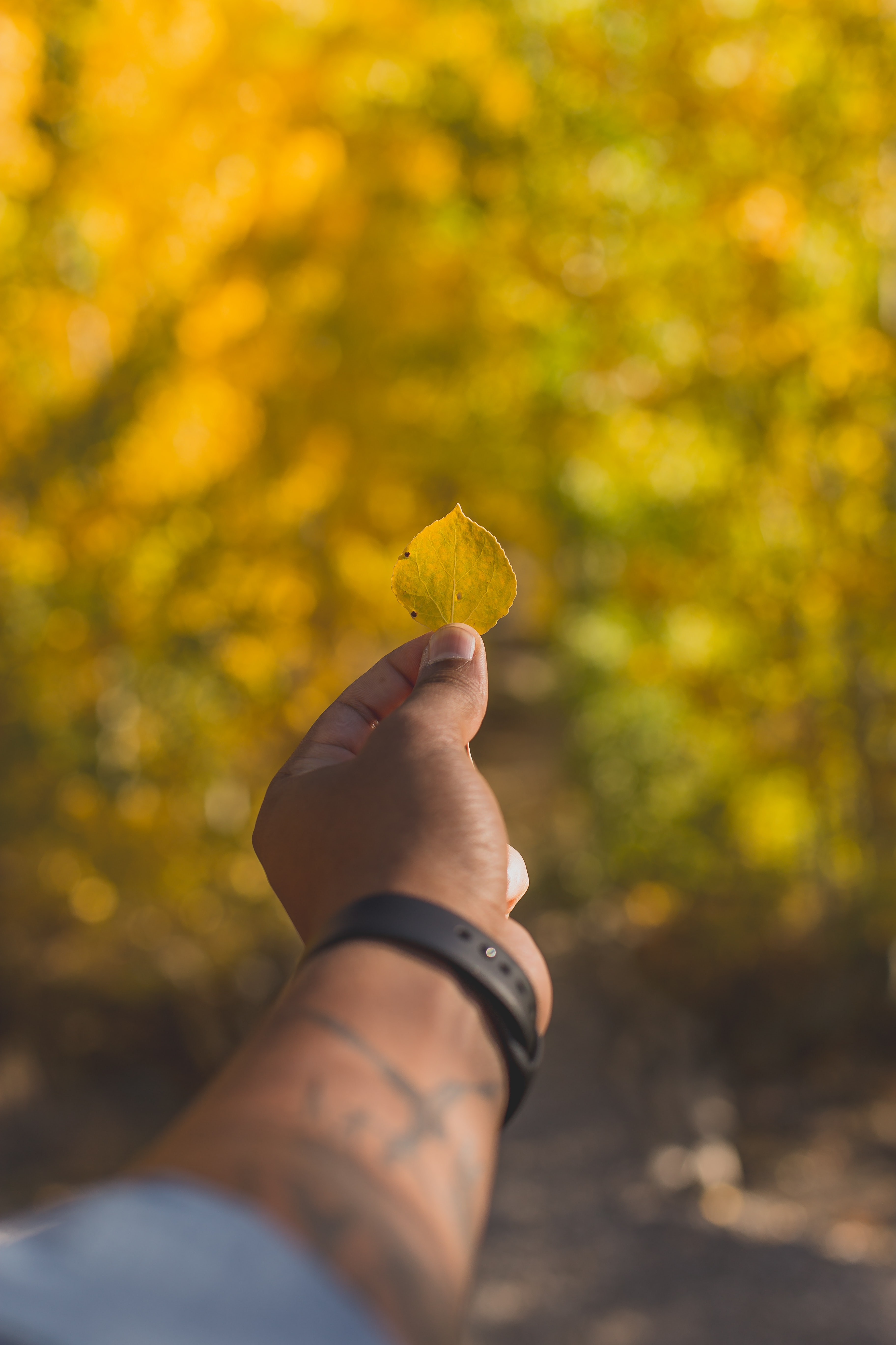 selective focus photo of person holding yellow leaf