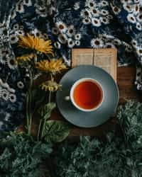 Tea dodocontest stories