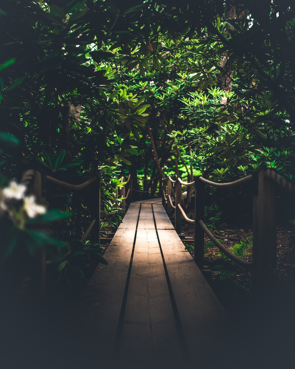 brown wooden pathway