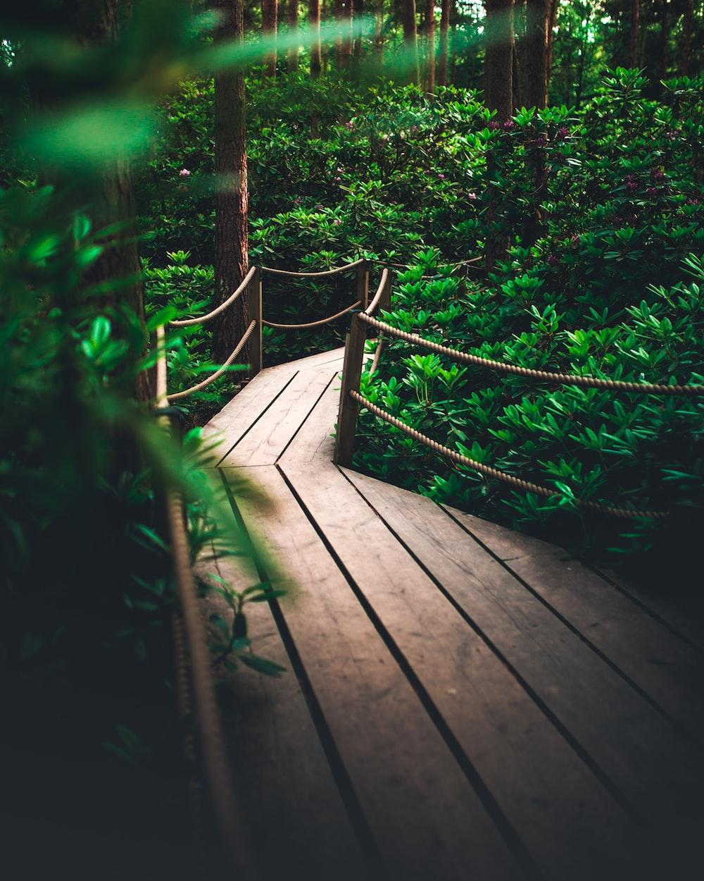 selective focus photo of brown wooden bridge