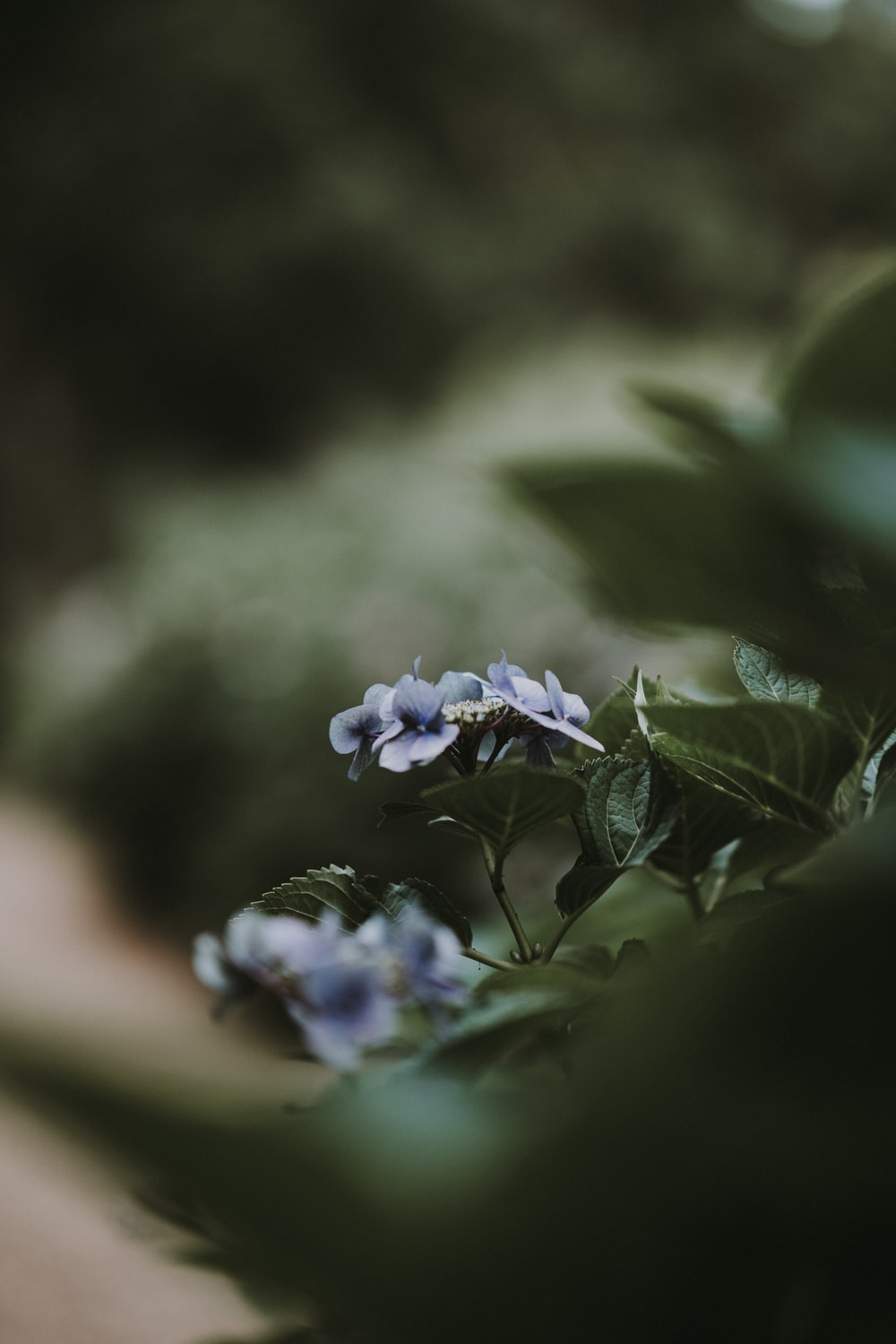 selective focus photography of purple flowers at daytime