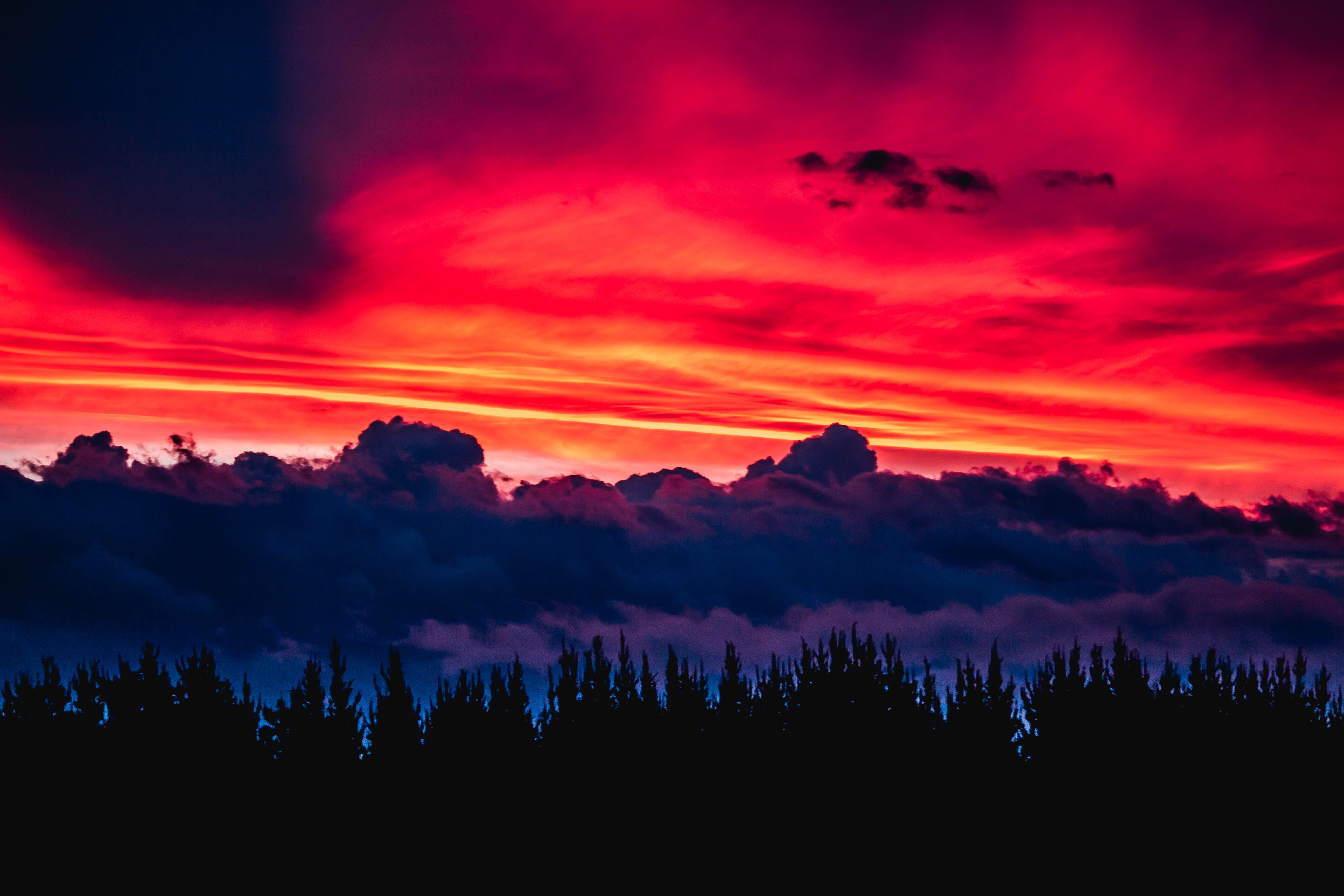 silhouette of trees under red sky
