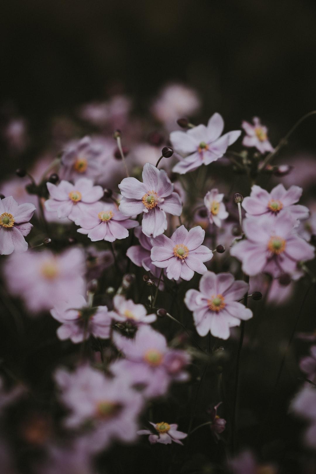 3930. Virágok