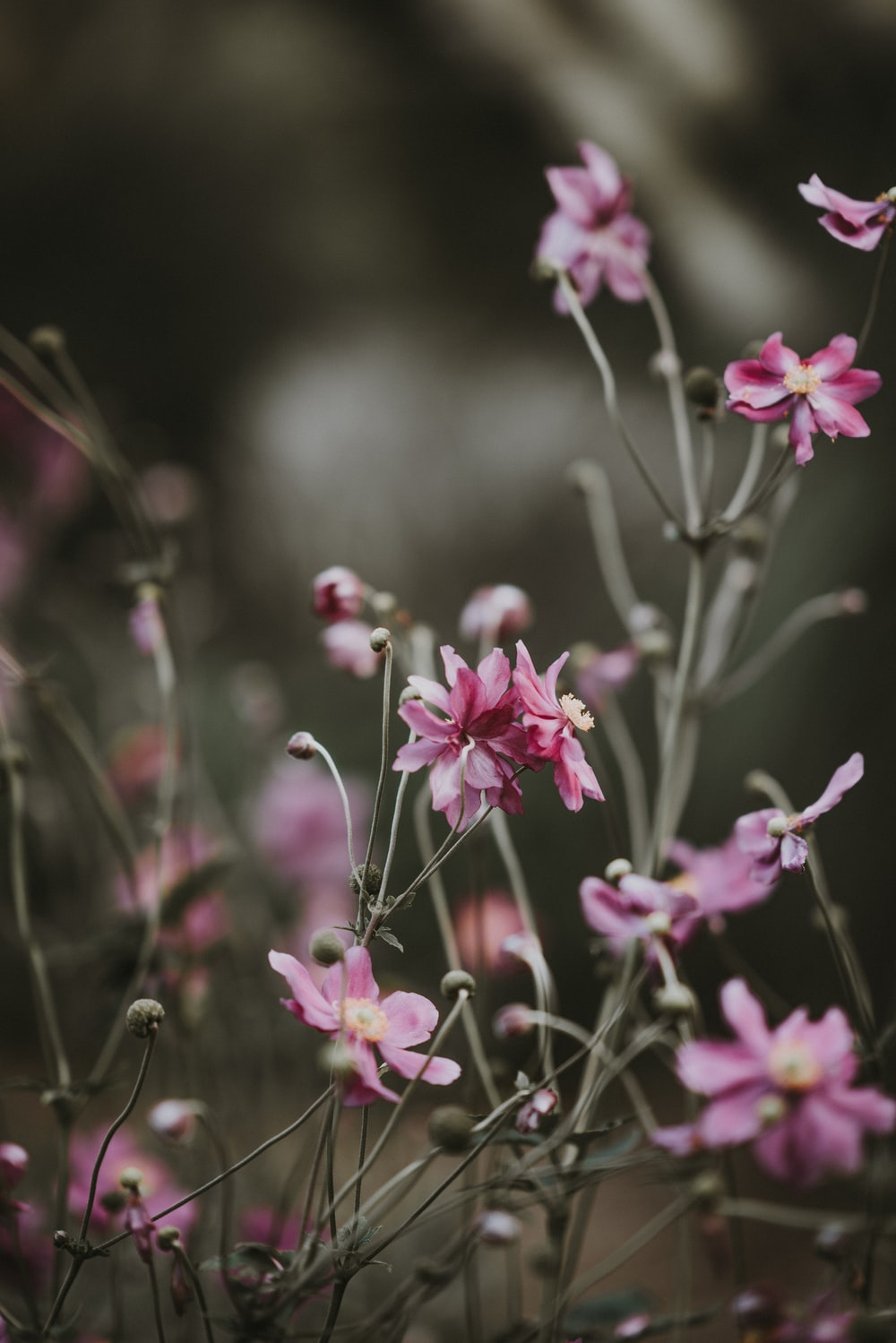 Delicate Pink Flowers Photo By Annie Spratt Anniespratt On Unsplash