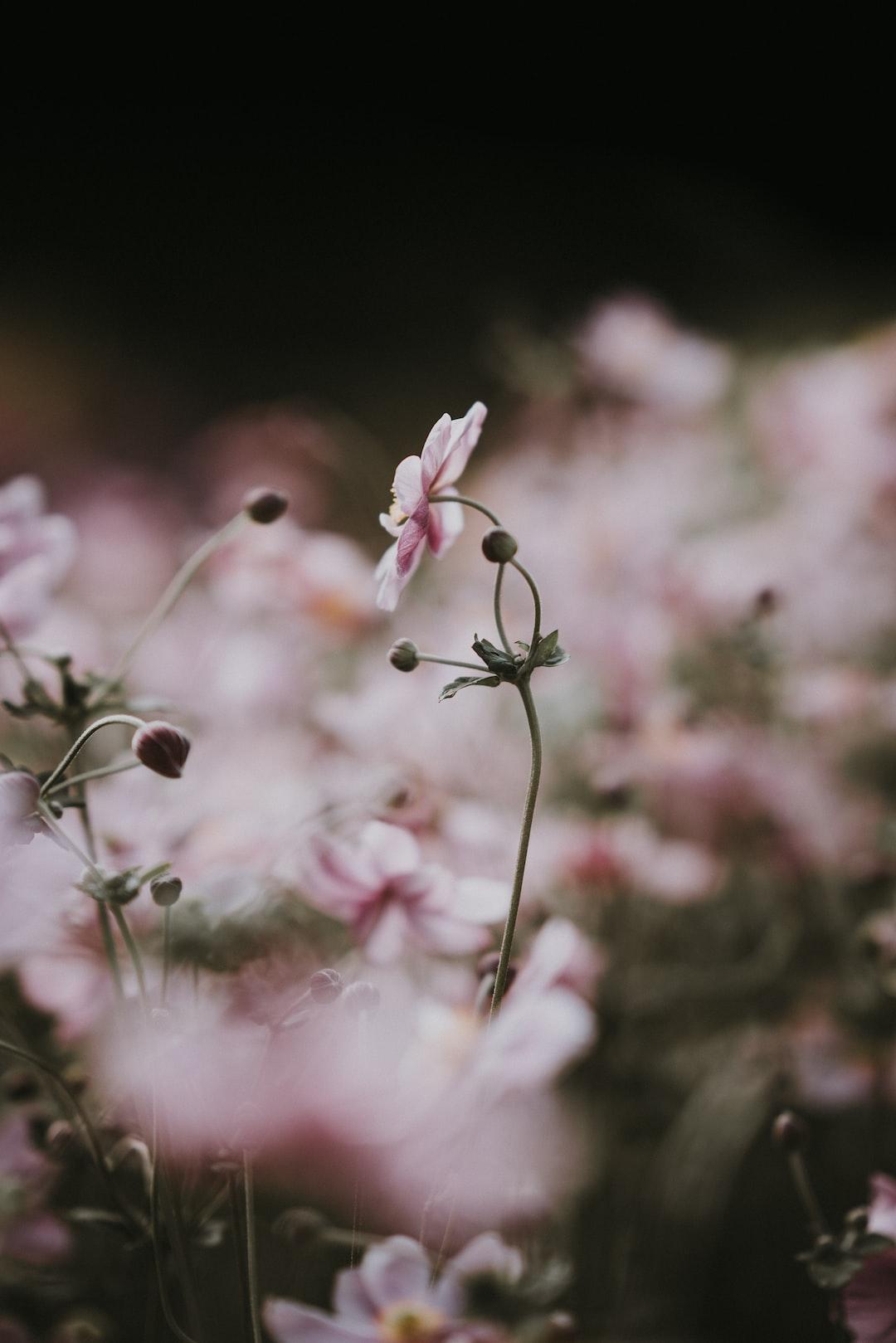 3870. Virágok