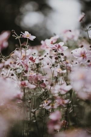 3943. Virágok