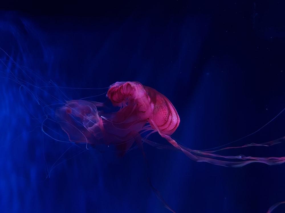 jellyfish underwater photo