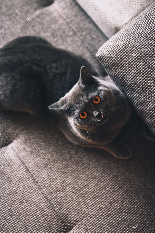 short-coated black cat on gray fabric seat