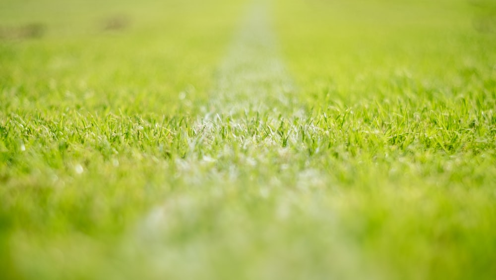 depth of field photography of grass