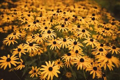 3895. Virágok