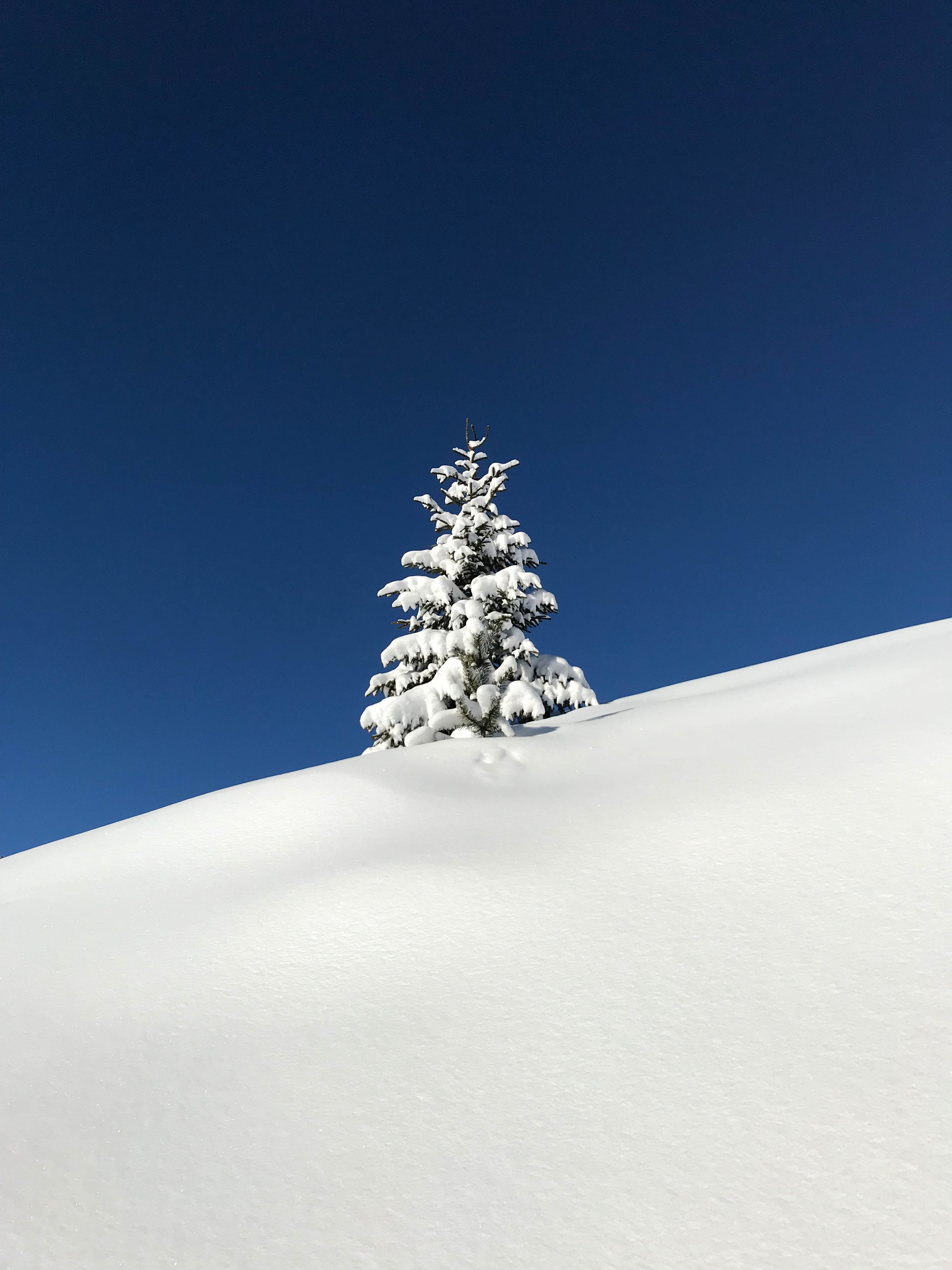 tree covered snow