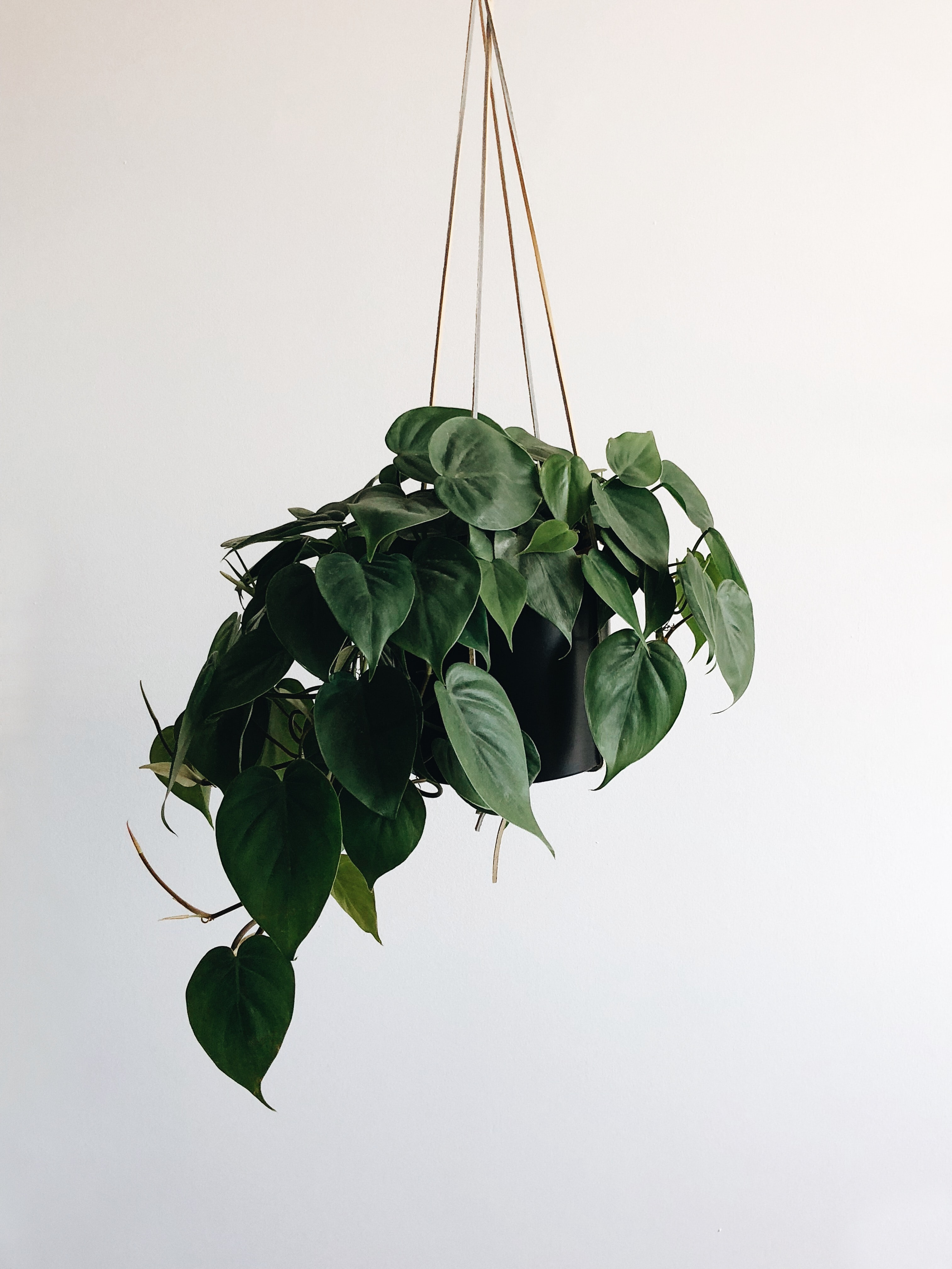 green leaves plant and black hanging pot rack
