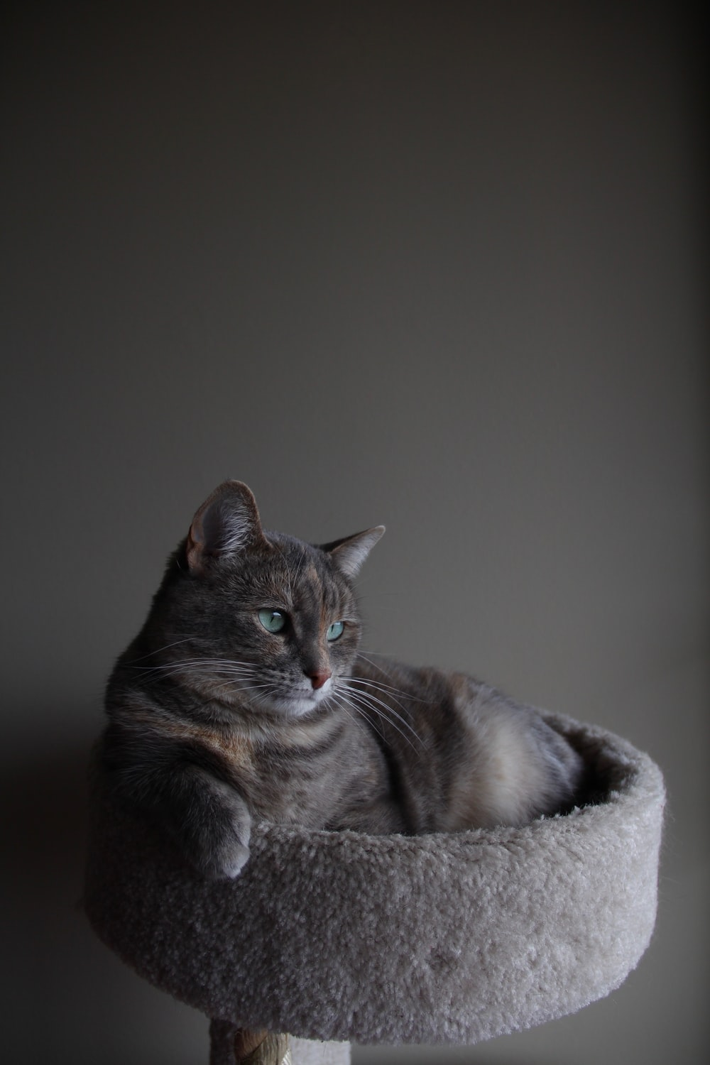 silver tabby cat on gray cat tree inside room