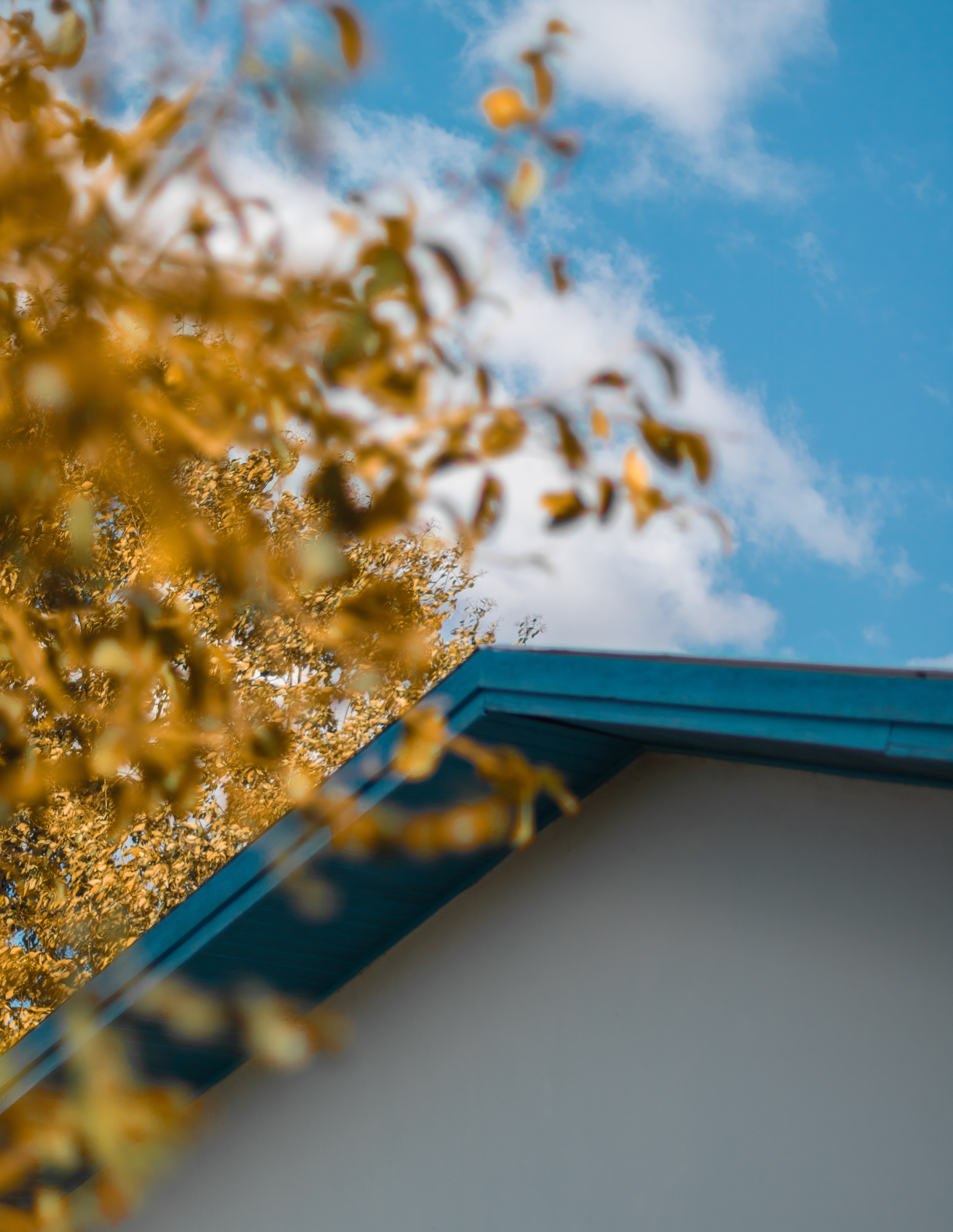 closeup photo of brown tree beside white and blue house under blue and white sky at daytime
