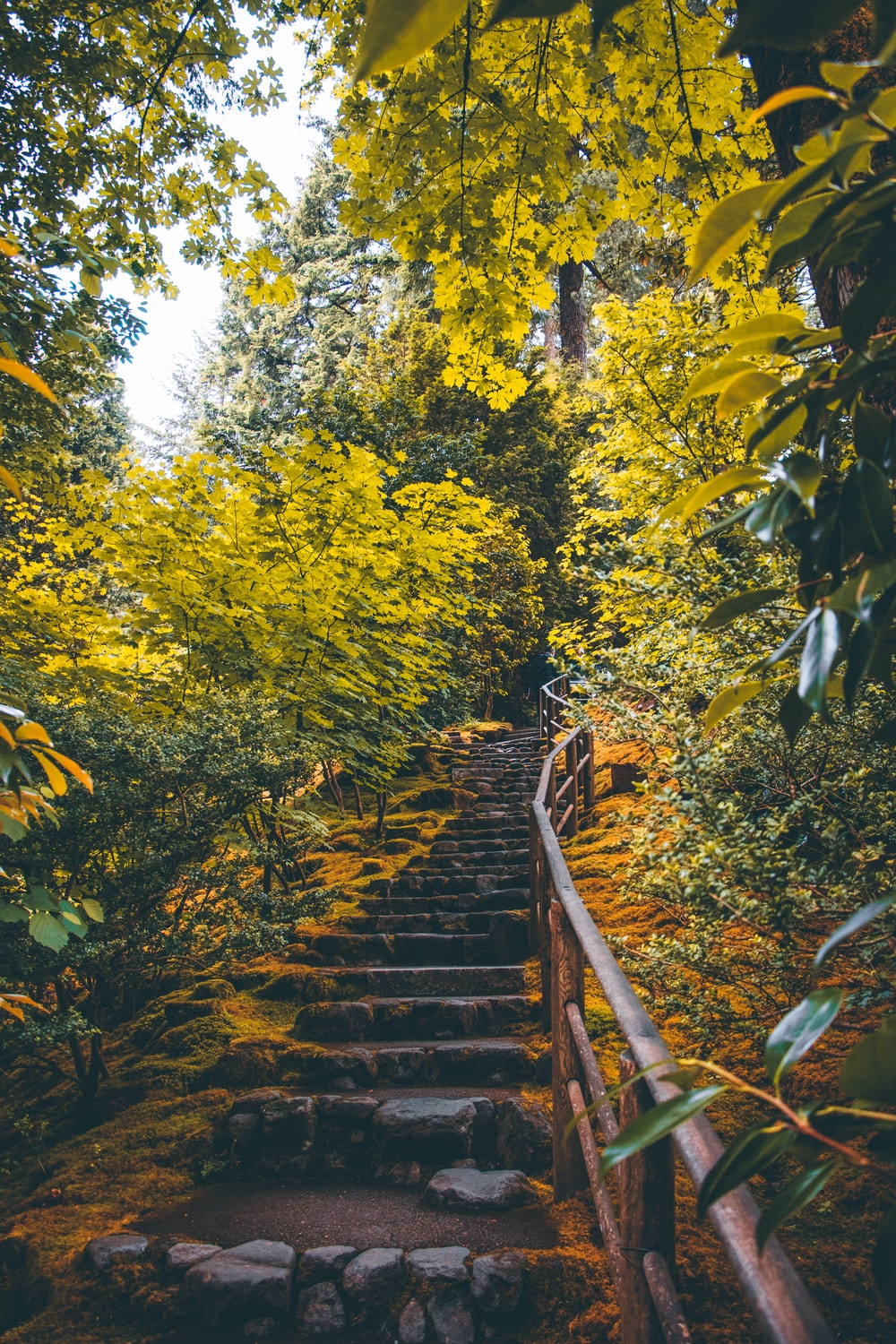 gray concrete stair on forest