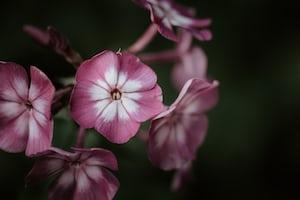 4802. Virágok