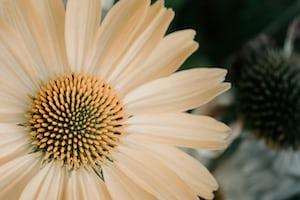4793. Virágok