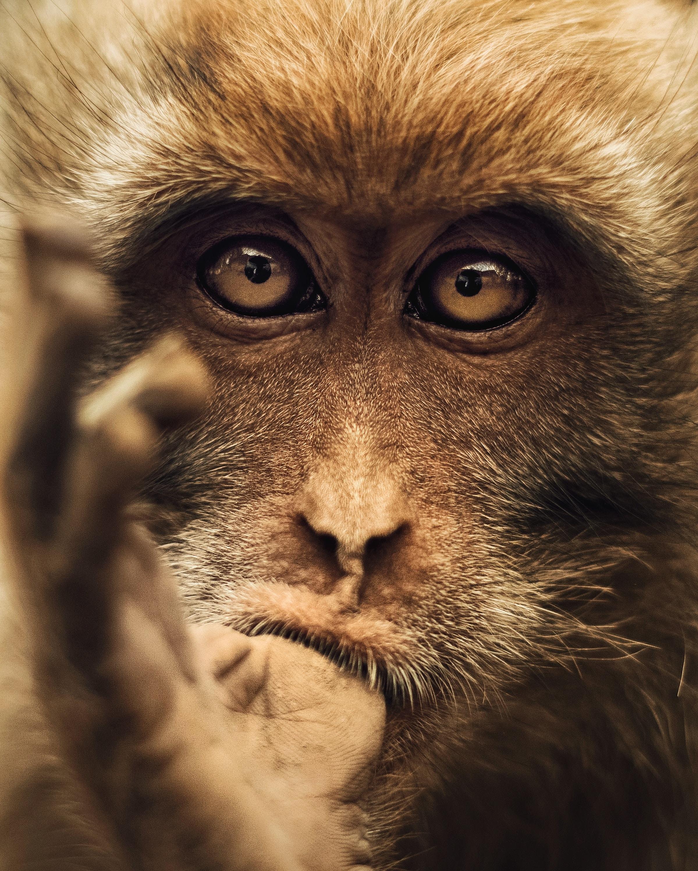 closeup photo of brown primate