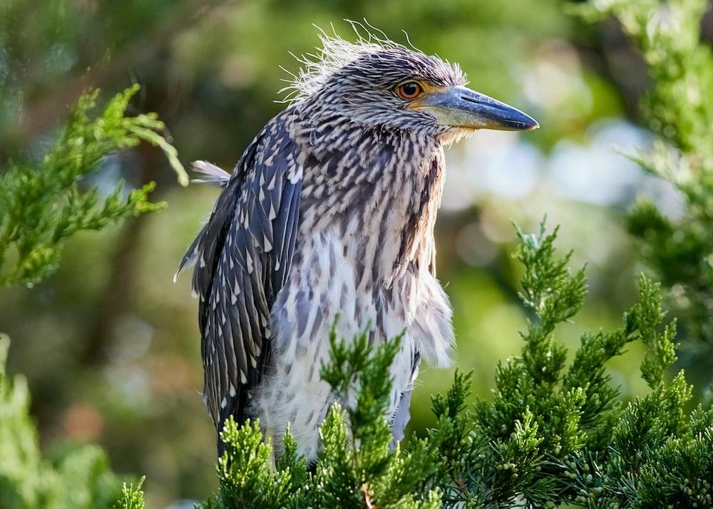 selective focus photo of brown long-beak bird
