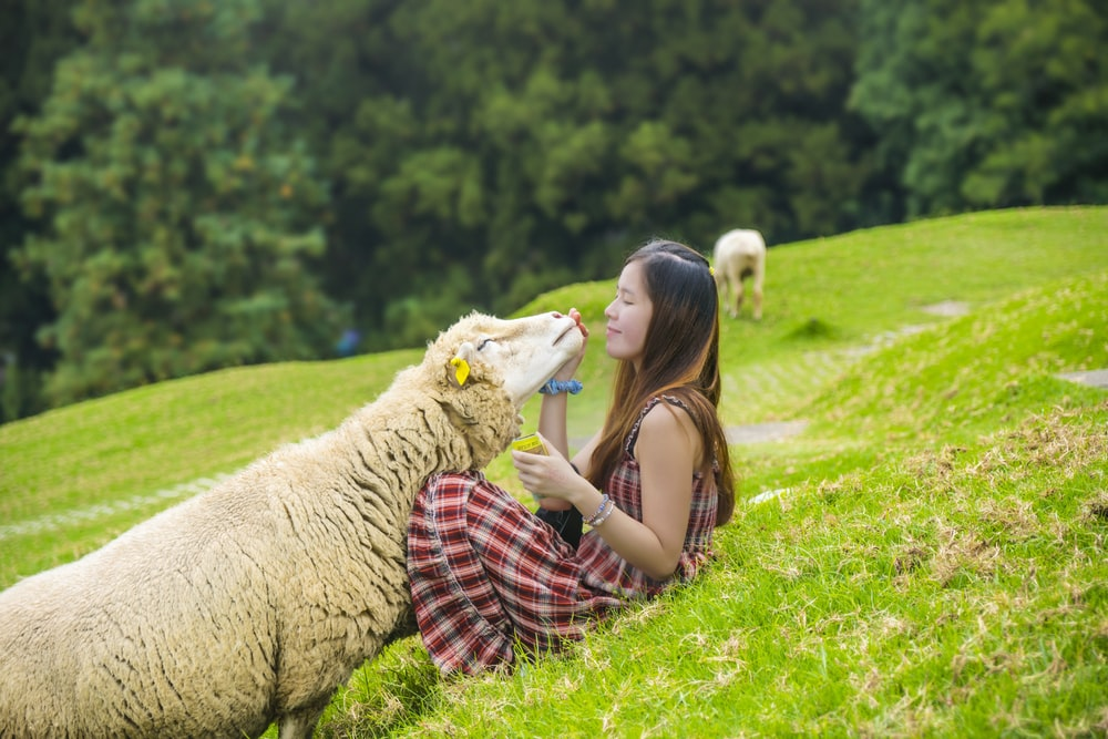 woman holding sheep's head