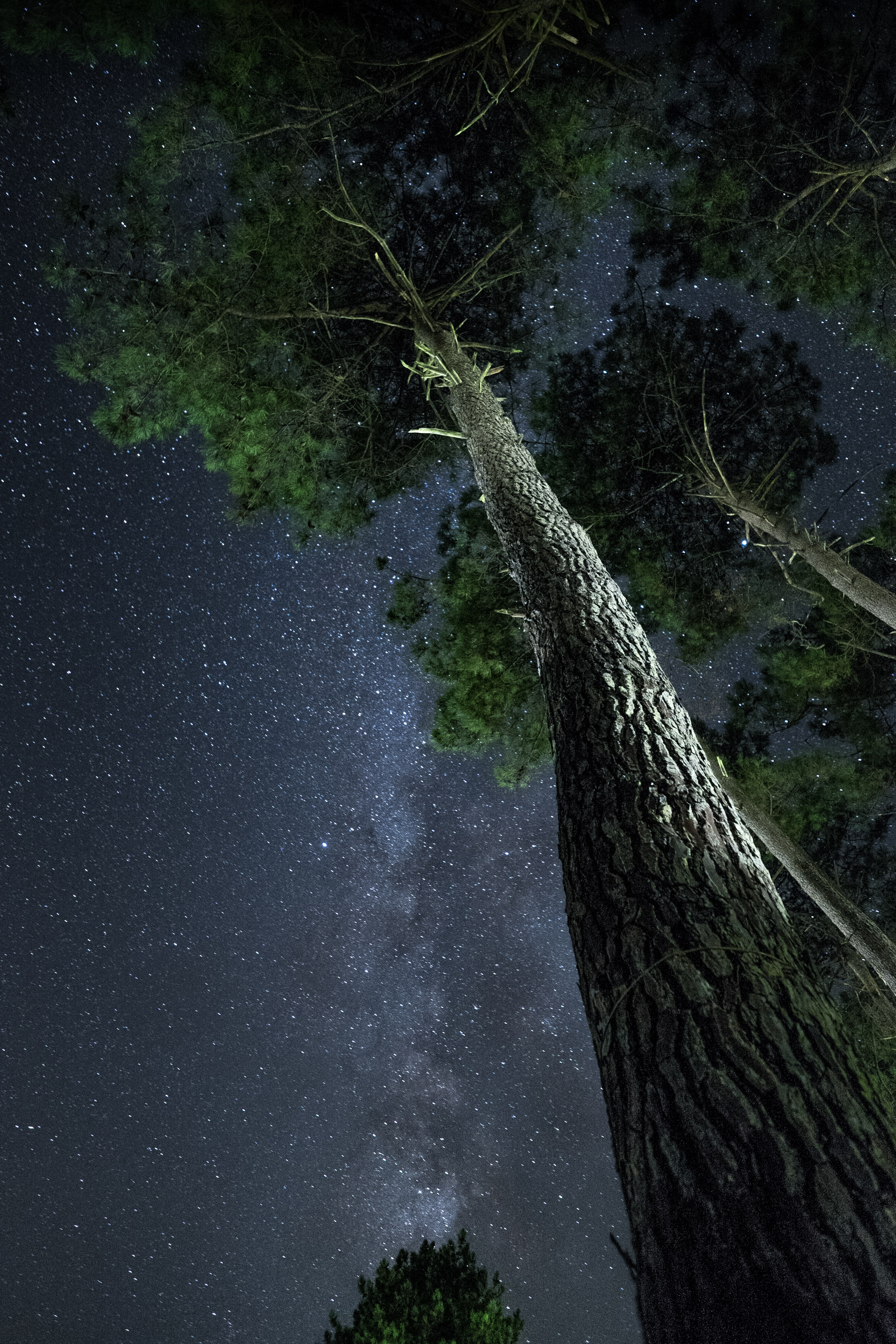 above photography of tall tree at night time