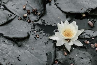 4788. Virágok