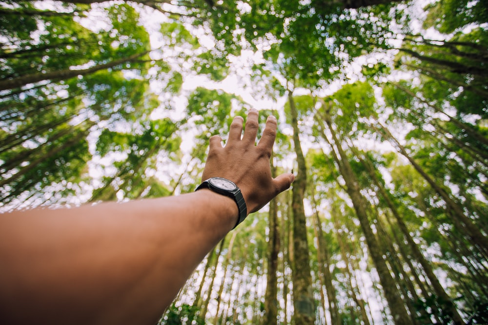 selective force perspective photo of left human hand about to reach green leaf trees