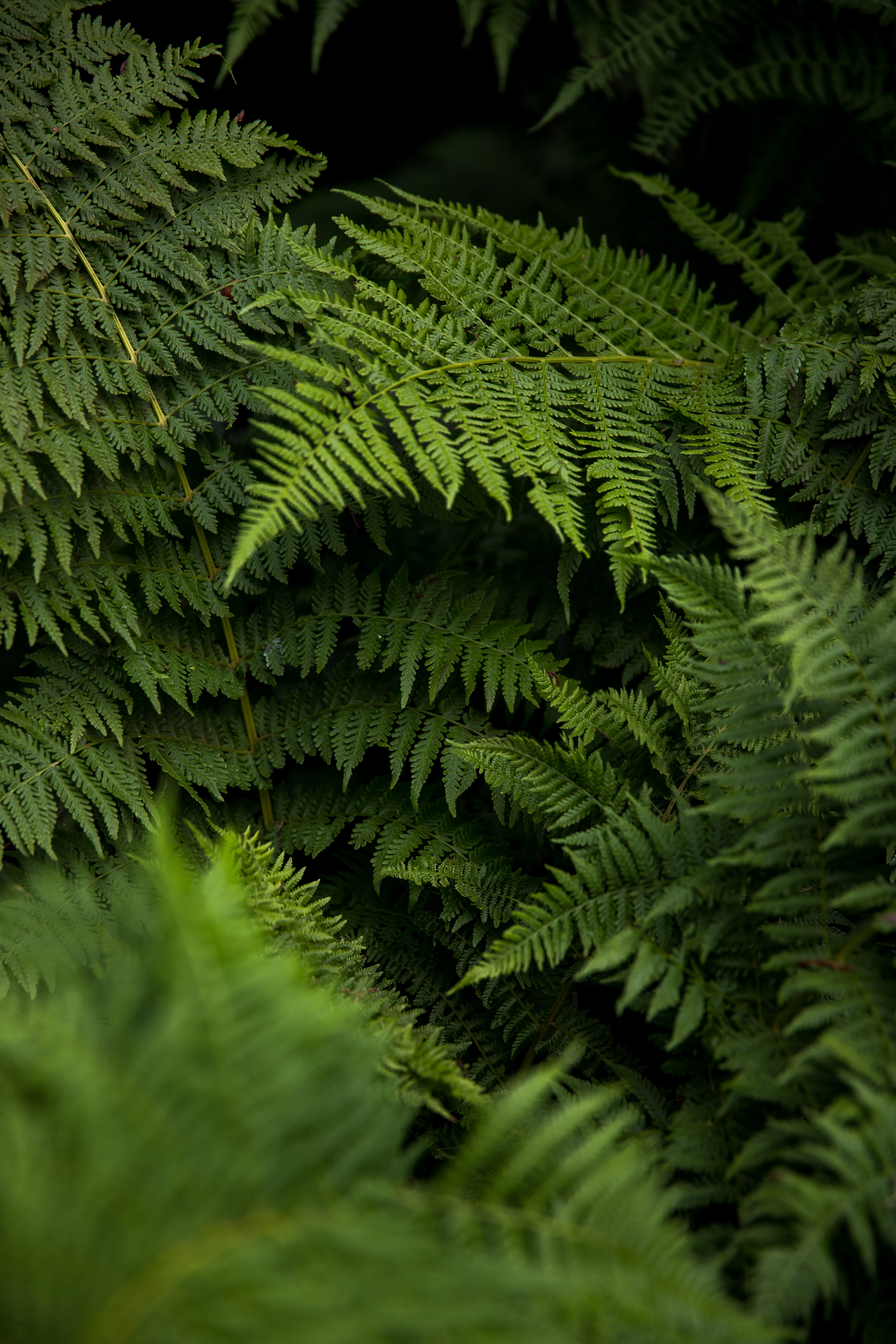 low light photography of fern plant