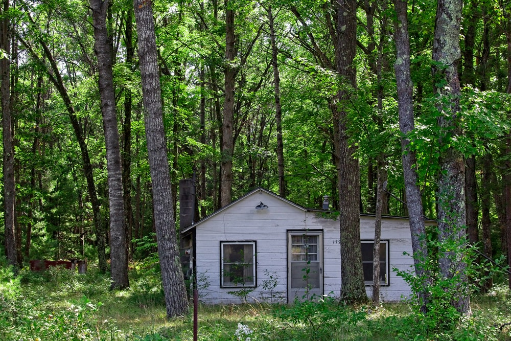 white cabin in forest