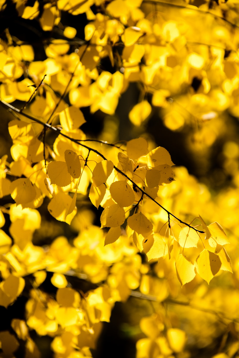 photo of yellow tree leaves