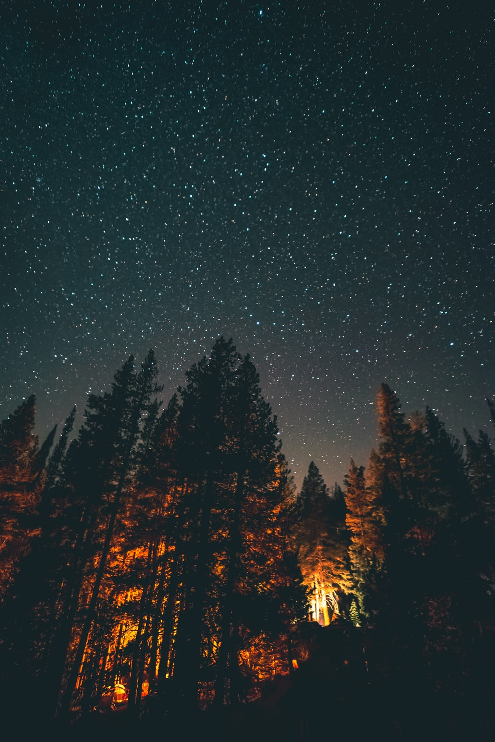 trees under the stars