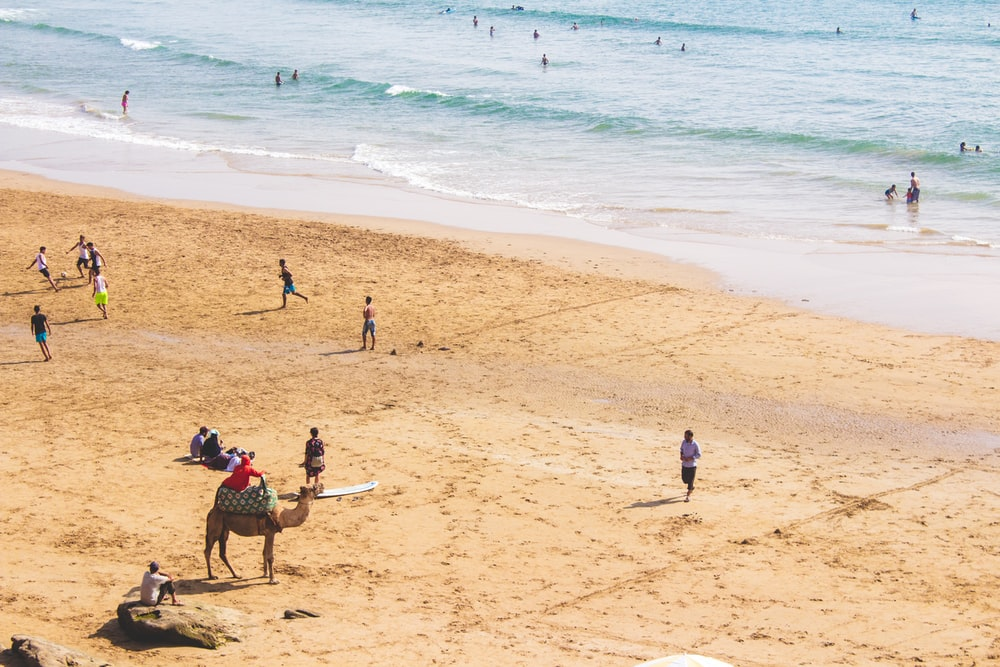 people and camel at beach during daytime