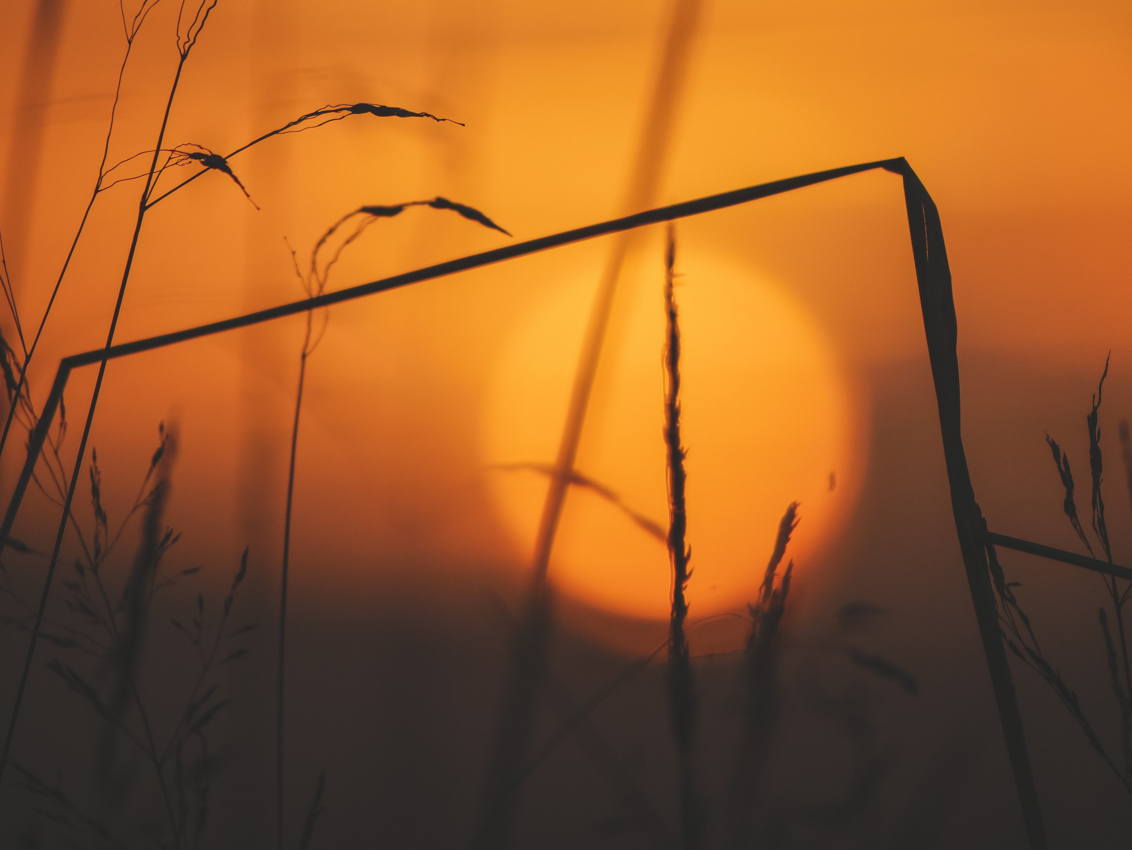 silhouette of grass