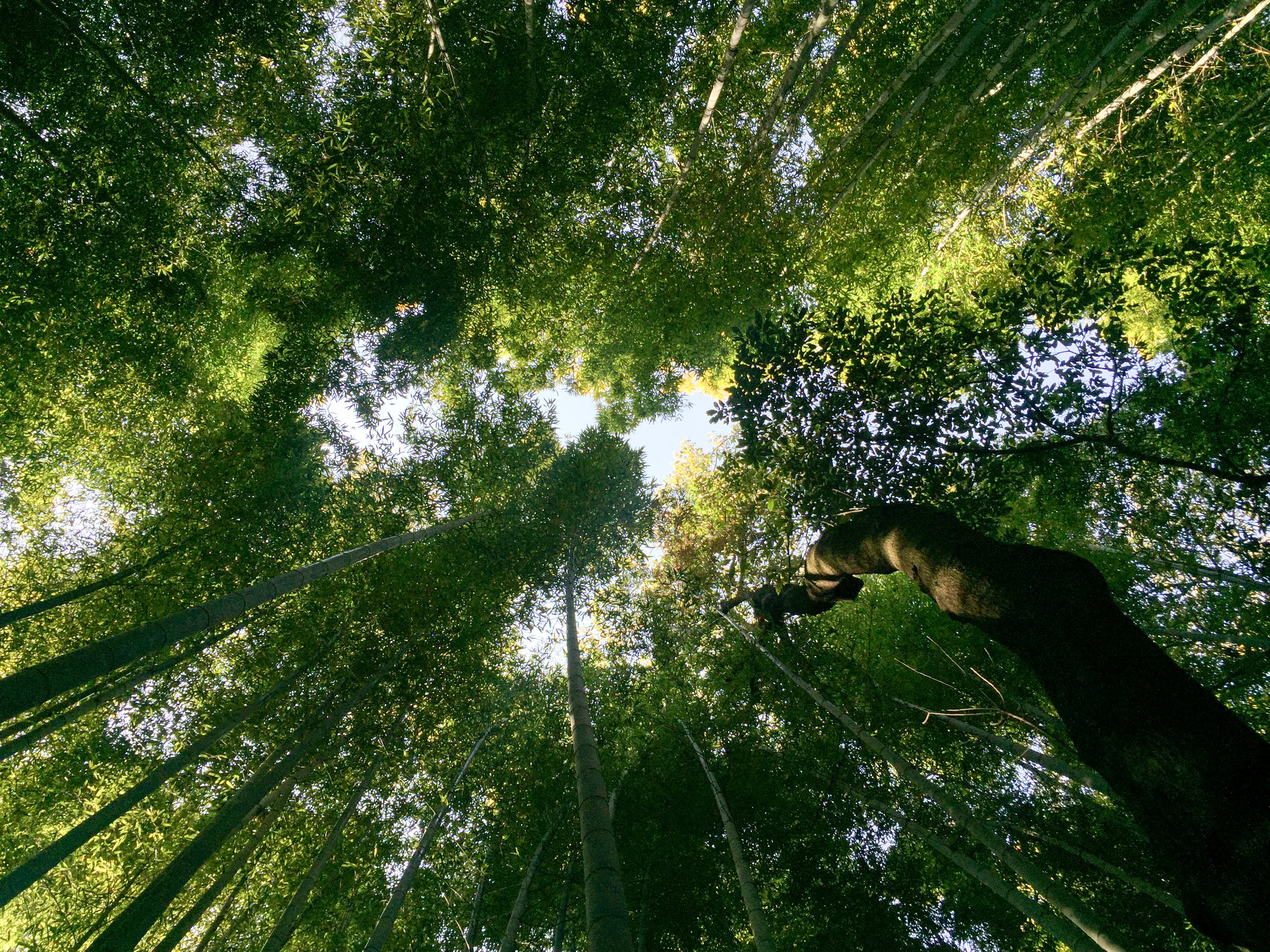 worms eye view forest