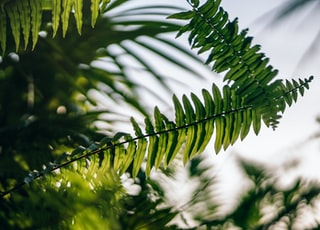 low-angle photo of green fern plant