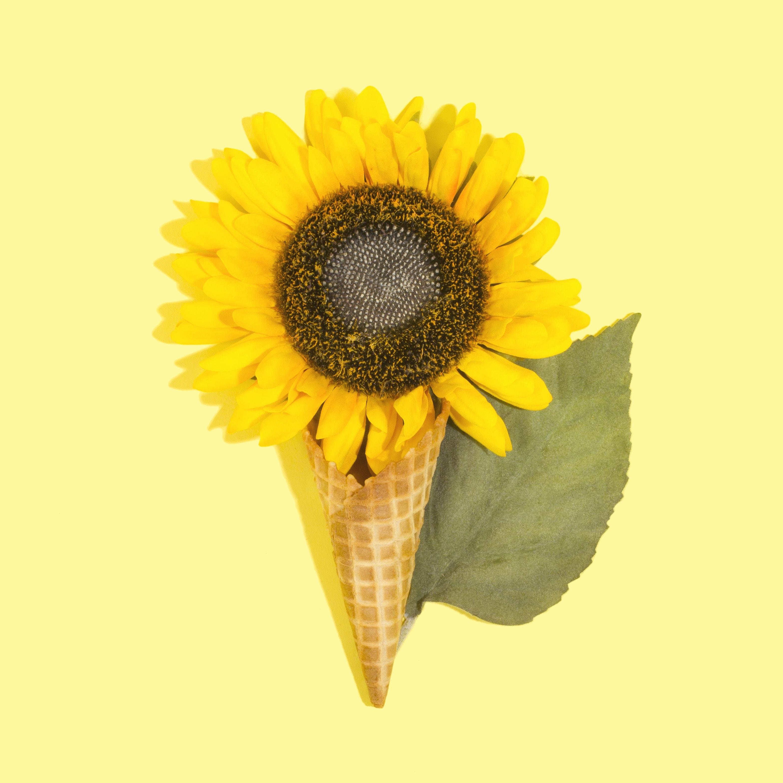 yellow sunflower in brown ice cream cone
