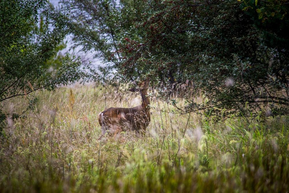 brown deer eating leaves