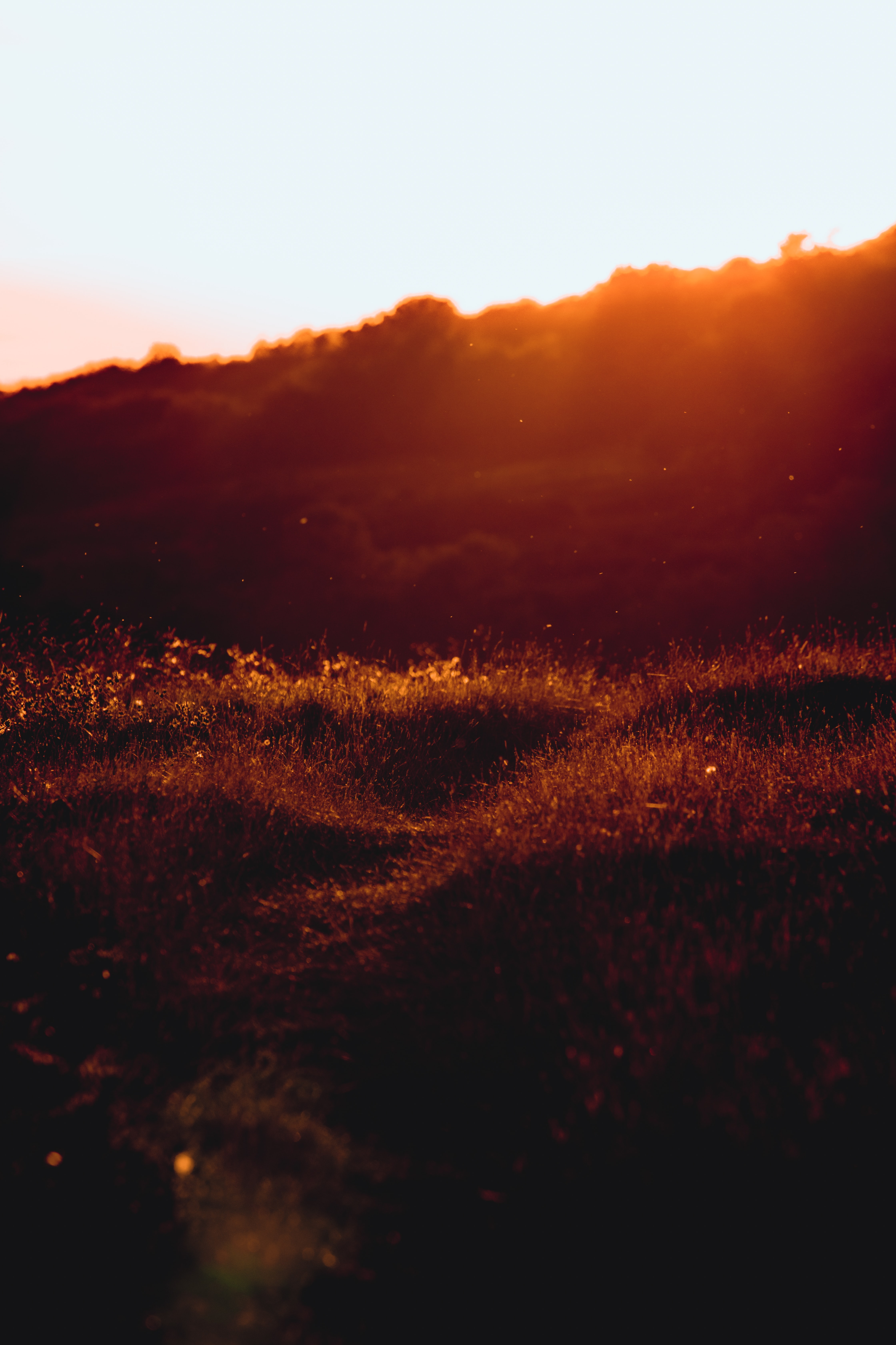 silhouette photography of grass during sunrise