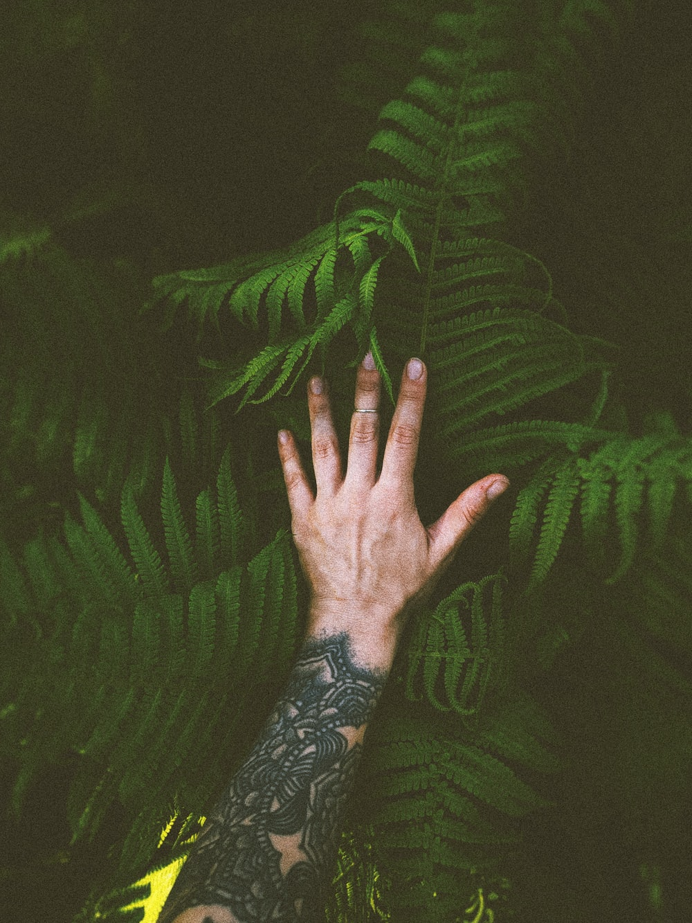 person holding green fern