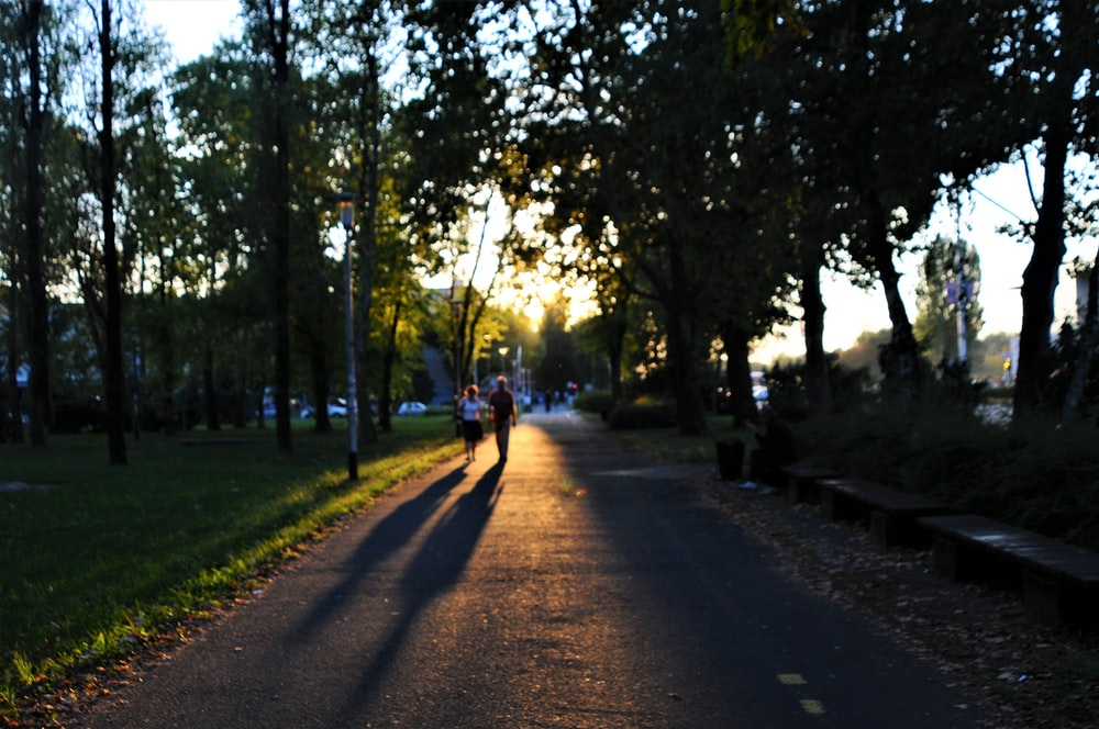 two people walking on park pathway surrounded by trees at daytime