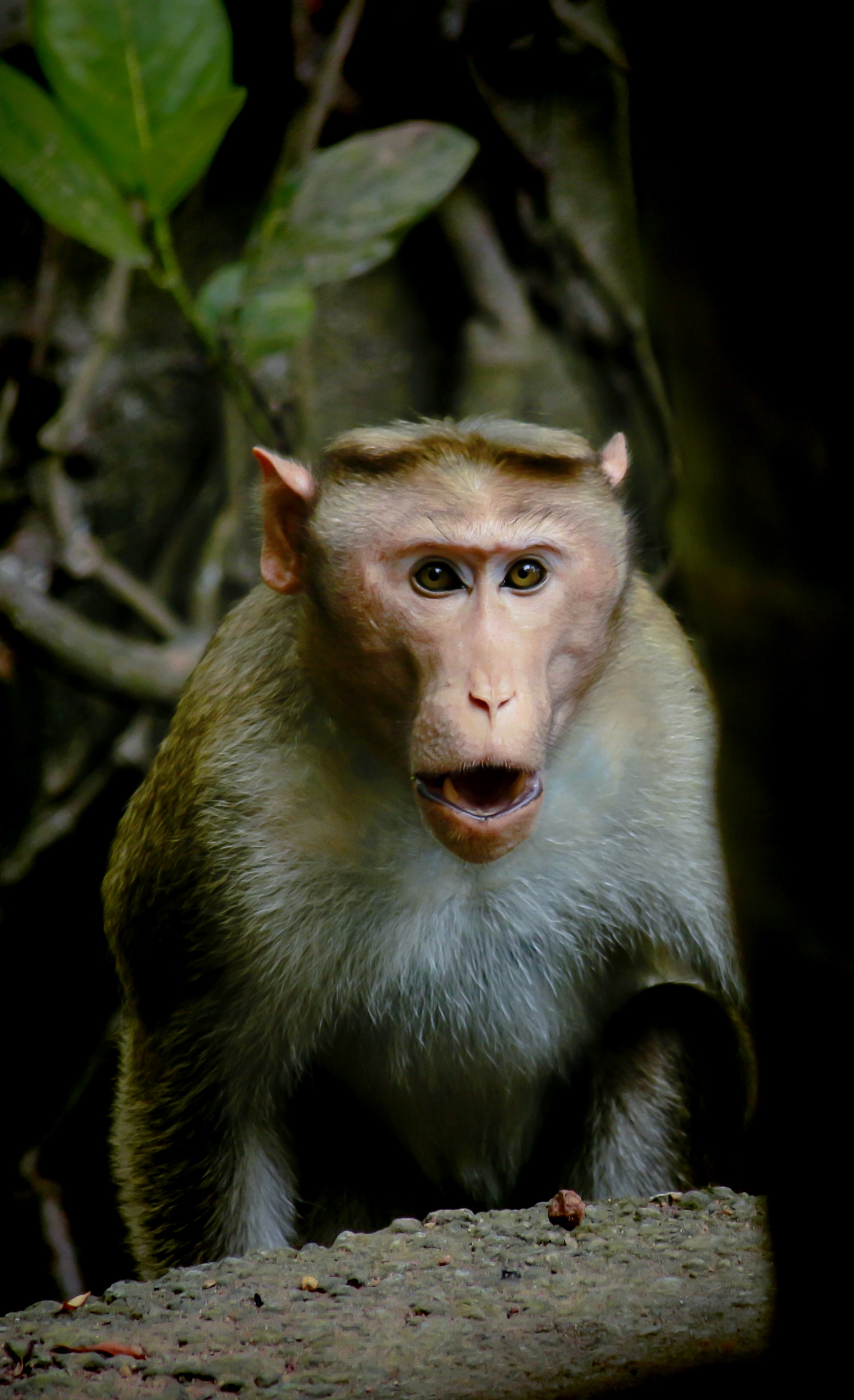 selective focus photography of ape