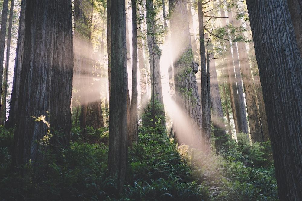 sunlight crosses on trees