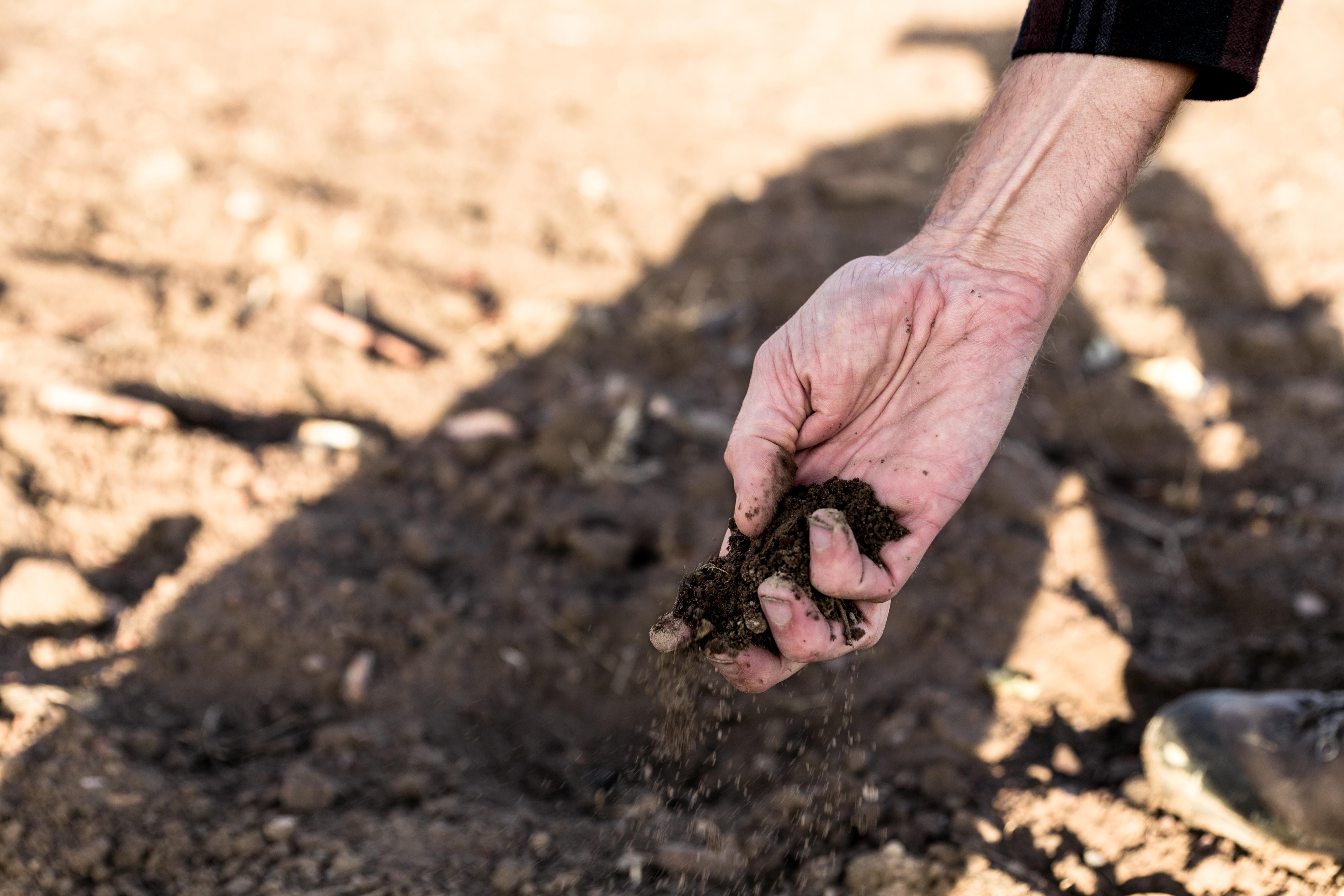 weed soil