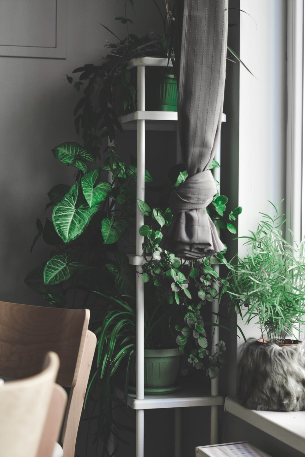plants on top of shelves