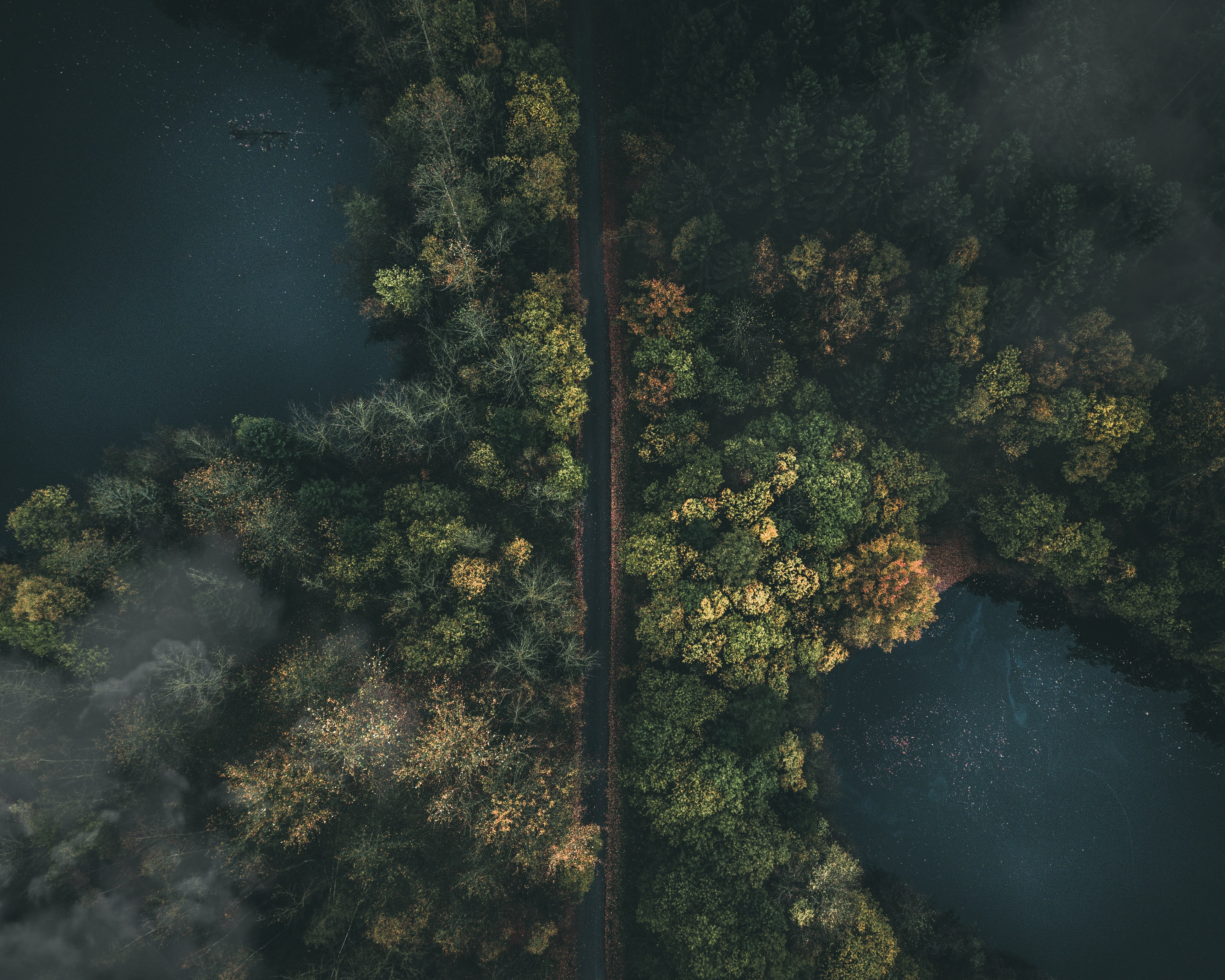 aerial photography of concrete road between trees and blue body of water