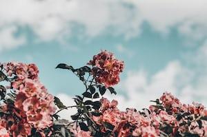 4796. Virágok