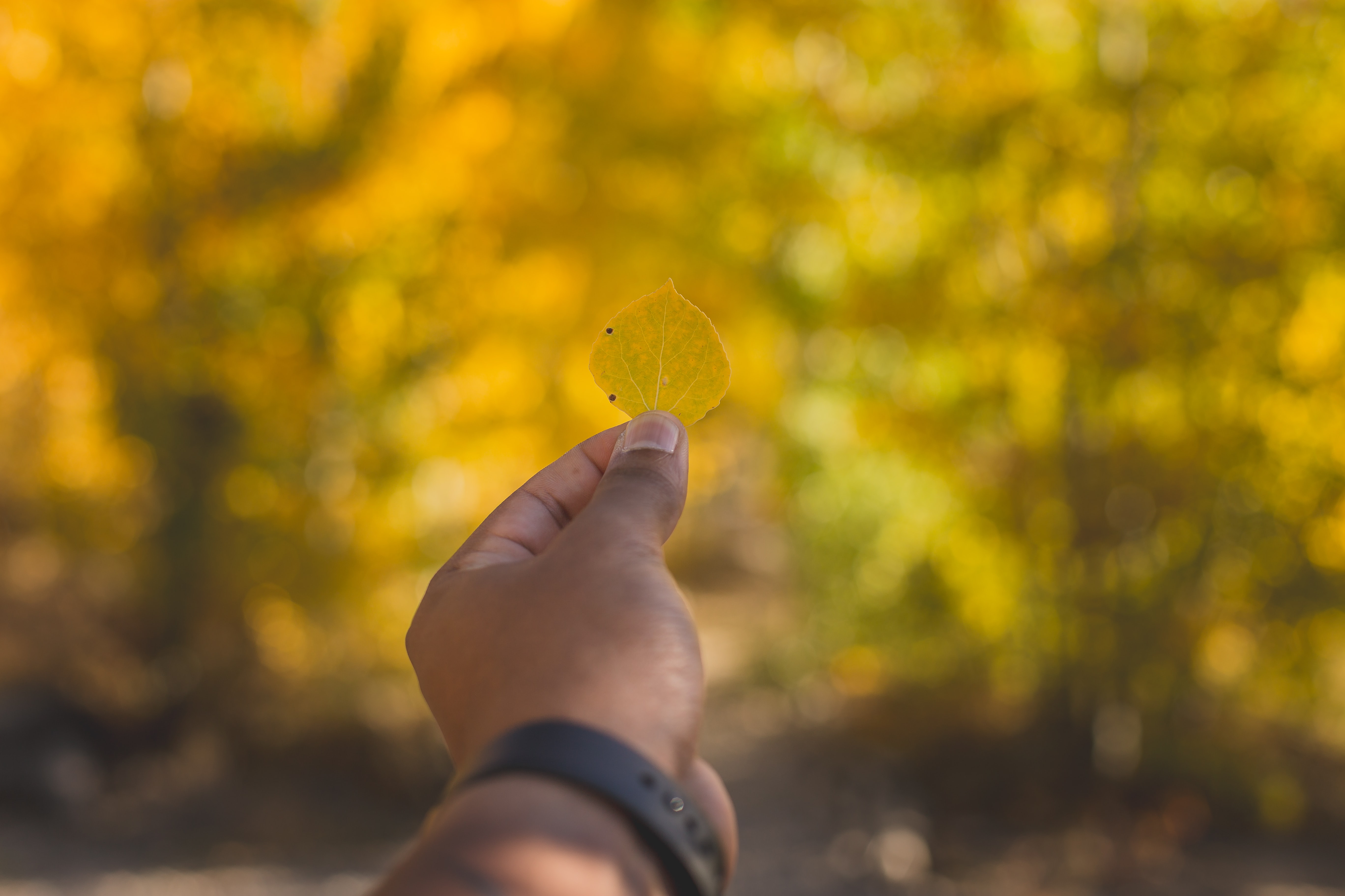 selective focus photography of diamond shaped yellow leaf
